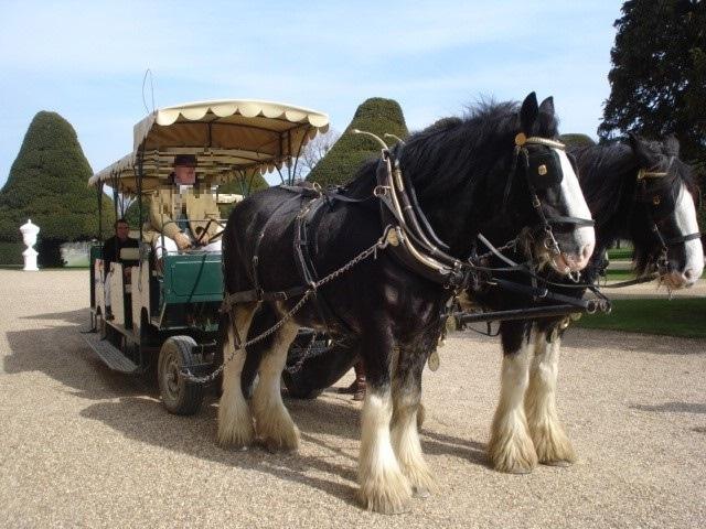 馬車とウマの写真