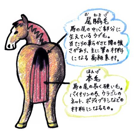 馬の尾脇毛イラスト