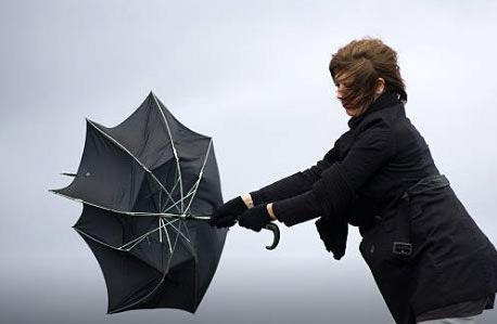 傘 おちょこ2